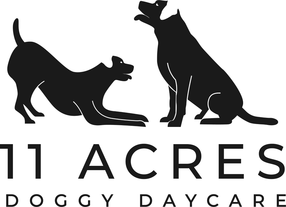 dog day care, day care for dogs