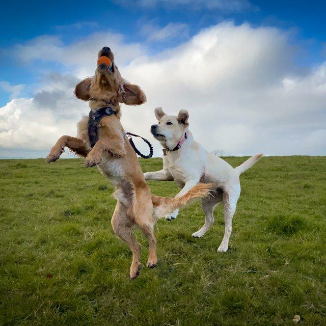 dog daycare centre malpas