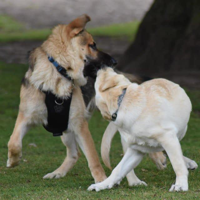 Dog day care Malpas Wrexham Chester