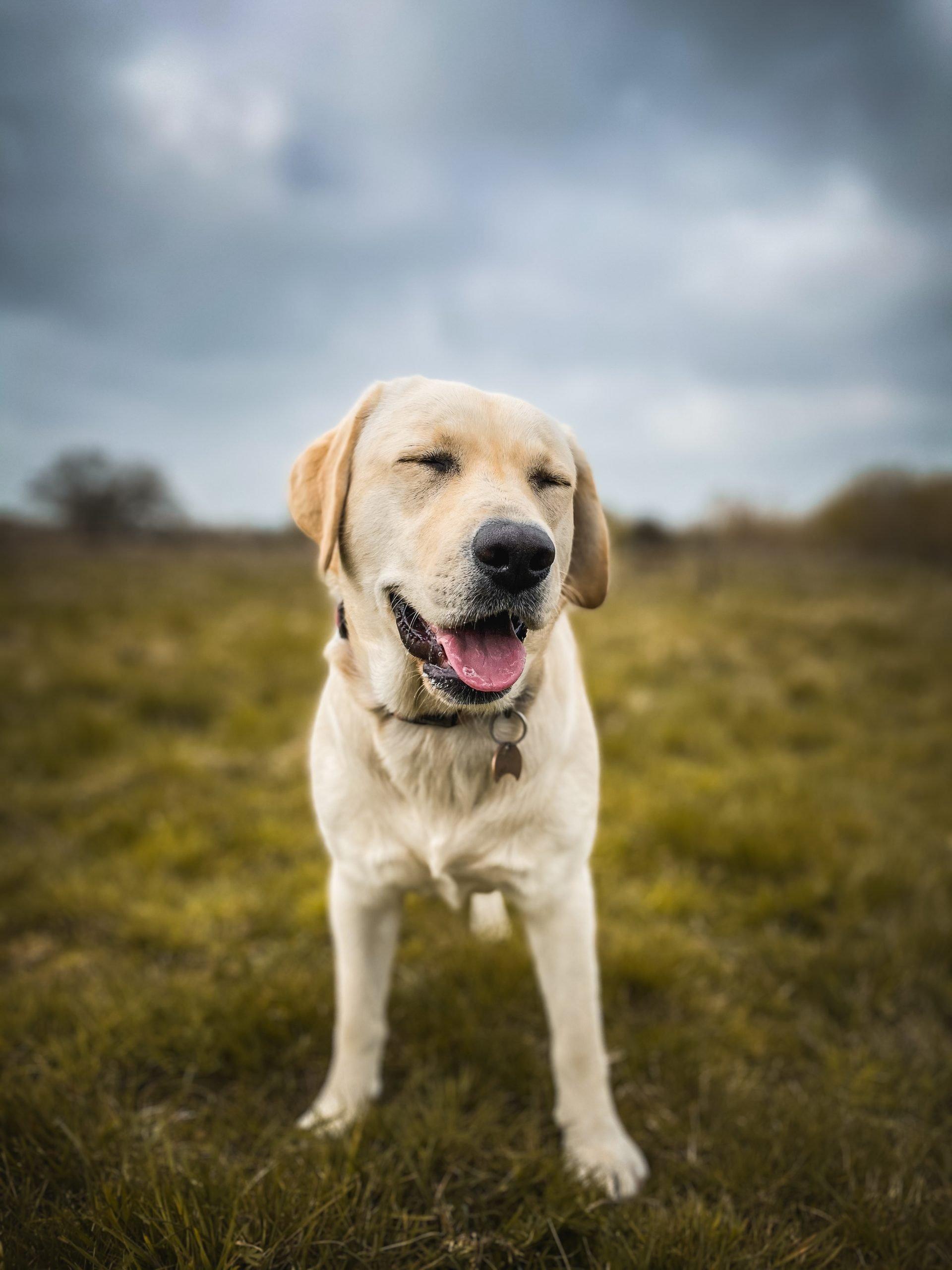 Doggy Daycare Malpas Worthenbury Wrexham Chester Walking Socialisation