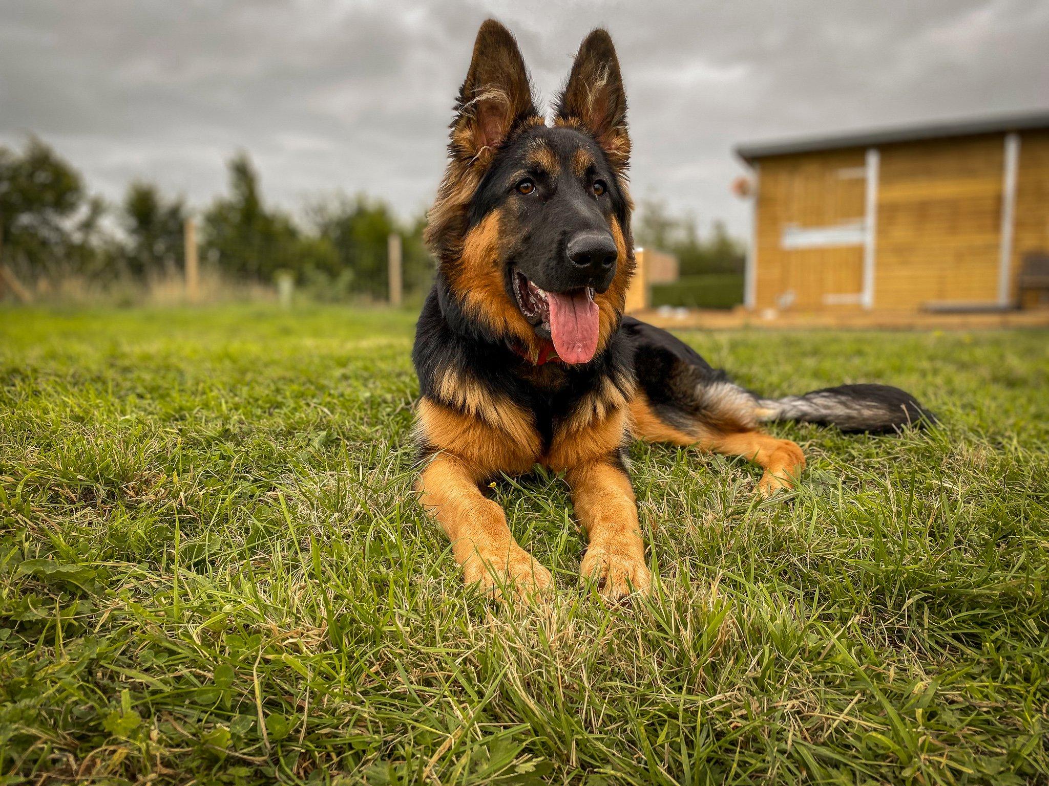Doggy Daycare Near Malpas